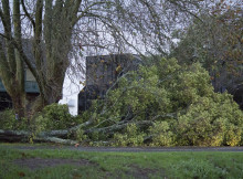 A fallen tree on Boundary Road